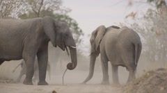 Elephant Herd Throwing Dust on there Backs with Baby- Slow Motion - (3) - stock footage
