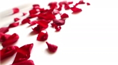 Red rose petals  on white background - stock footage