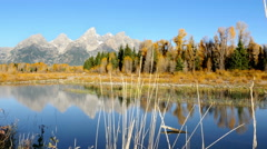Grand Tetons National Park, Leaves, Color, Autumn Stock Footage