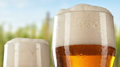 Beer glasses with hop-field on background - stock footage