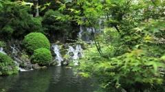 Japanese maple tree Stock Footage