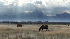 Horses Grazing, Grand Tetons National Park Stock Footage