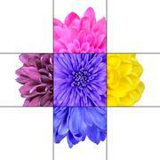 Colorful Chrysanthemum Flower Mosaic Design - stock photo