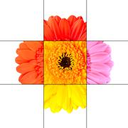 Colorful Gerbera Marigold Flower Mosaic Design Stock Photos