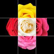 Colorful Rose Flower mosaic design - stock photo