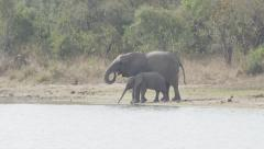 Elephant Herd Going to Drinking Hole Stock Footage