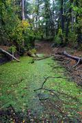 Swamp in autumn forest Stock Photos