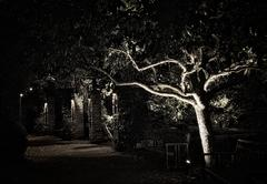 Gnarled tree and shadowy brick walkway at night Stock Photos