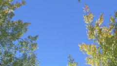 Trees Blowing In Wind Shot Slowly Pulling Backward Bird Fly Over Stock Footage
