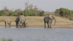 Elephant Herd Drinking at waterhole - Slow Motion Stock Footage