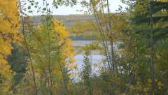 Trees Forest River Hills Woodland Leaves Push In Zoom Stock Footage