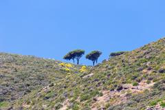Solitary trees on the island Stock Photos