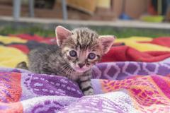 Stock Photo of Adorable and sleepy tabby kitten