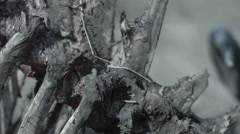 Buffalo Skeleton Pan Stock Footage