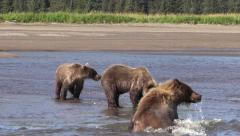Sow bear joins cubs Stock Footage