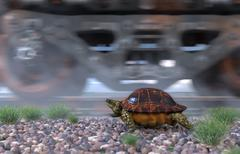 Railway track and train with running turtle. Travel  technology concept Piirros