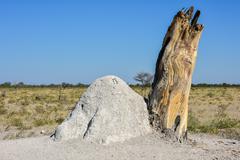 Termite Mound - Namibia Stock Photos