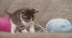 Kittens playing with a ball of wool on a couch Stock Footage