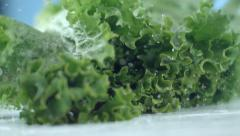 Lettuce falling and splashing in slow motion; shot on Phantom Flex 4K at 1000 - stock footage