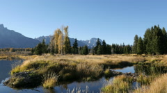 Beaver Dam, Grand Tetons - stock footage