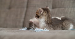 Kittens playing with a ball of wool on a couch - stock footage