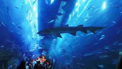 Dubai Oceanarium 2 Stock Footage