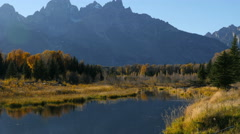 Beaver Swimming, Grand Tetons - stock footage