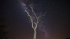 Galaxy and Star Time Lapse with Dead Marula Tree Stock Footage