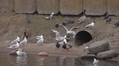 Ungraded: Feeding Birds Stock Footage