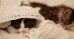 Sleepy kitten underneath a cosy woollen blanket Stock Footage