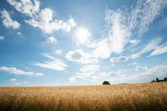 HDR capture of rye fields with a big sky, Baden-Wurttemberg, Germany, Europe - stock photo