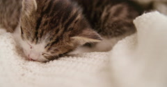 Kitten sleeping on blanket - stock footage