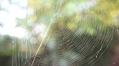 close up of a spider web in autumn day at the park - stock footage
