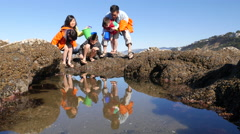 Family at beach looking at tidepool - stock footage