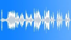 Wild turkey 1 Sound Effect