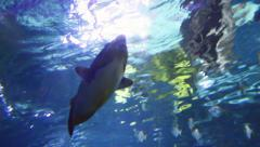 Fish swimming above camera Stock Footage