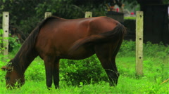 Close shot a grazing horse. Stock Footage