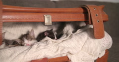 Kitten amongst it's siblings in a warm blanket Stock Footage