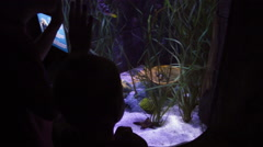 Child looking at aquarium Stock Footage