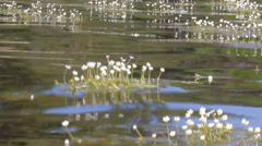 Rowing boat floats on water weeds buttercups Stock Footage