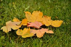 Leaves in Indian summer Stock Photos
