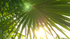 Sun shines through tropical palm leaves Stock Footage