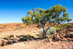Kings Canyon Flora - stock photo