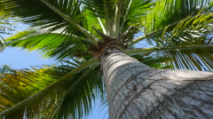 Looking up at tropical palm tree - stock footage