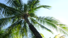 Palm branches and sun - stock footage