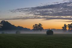Packed roles grass in the early morning - stock photo