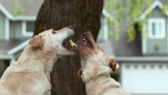 Dogs catching treat in slow motion, shot on Phantom Flex 4K - stock footage