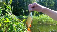 Evening lake freshwater fishing for Rudd Stock Footage