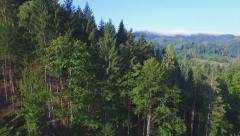 Aerial: flight in Carpathians pine forest. Stock Footage