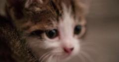 Baby tabby cat looking sleepy in a woollen blanket Stock Footage